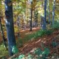 07. Jesień w Szczyrku